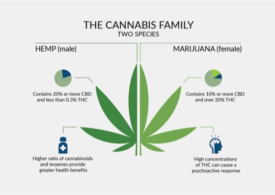 The Cannabis Family